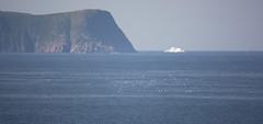 Planet Earth (Loops666) Tags: newfoundland ocean sea atlantic iceberg whale seagulls world planet earth geology water life