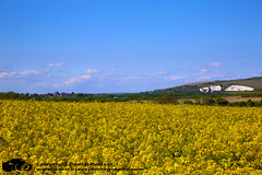 Rapeseed lewes (www.eastsussexphotography.com) Tags: rapeseed blue sky yellow cliff lewes east sussex canon 5d mk3 2470l