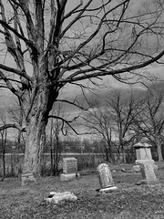 St. Peter's Cemetery (Ken Mattison) Tags: cemetery tree graves gravestones oaktree springtime spring bnw blackandwhite bw monochrome old outdoor peaceful serene quiet decay panasonic panasoniclumix fz1000 midwest milwaukee wisconsin milwaukeewisconsin
