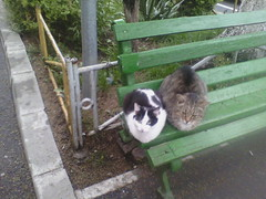 IMG07270 (chicore2011) Tags: tabbies sulking about weather