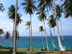 tropical beach (aningasaljepret) Tags: beach indonesia island coconut aceh pantai sabang weh