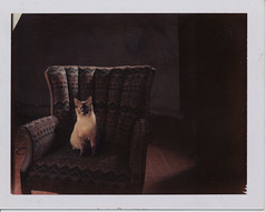 Sandy (O Caritas) Tags: mamiya cat studio polaroid chair michigan sandy basement kitty lansing s type pro 1991 circa 669 rb67 mamiyarb67pros mosleyavenue mamiyasekor90mm38c