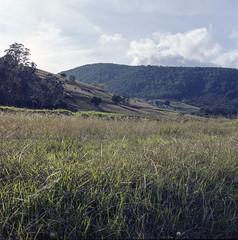 Hunter Valley (mdekauwe) Tags: color colour tree 120 6x6 film mediumformat square landscape wine kodak australia hasselblad nsw newsouthwales portra huntervalley 500cm carlzeiss c41 tetenal