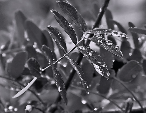 Raindrops Like Jewels On A Bed Of Velvet
