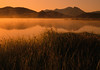 Morning Mist on a Lake (Utah Images - Douglas Pulsipher) Tags: morning sun mist mountain lake mountains reflection reed water misty sunrise reeds reflecting still montana lakes peaceful calm cattails redrocksnationalwildlifepreserve