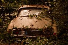 Citroen DS (Matthias-Hillen) Tags: abandoned overgrown amsterdam rust citroen ds rusty ivy matthias rost zeeburg rostig hillen wrack outtopasture autowrack dornröschenschlaf zuiderijdijk matthiashillen