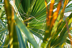 Thicket © (Blackcatatheart) Tags: travel sun sunlight green nature look leaves yellow outside outdoors leaf focus day natural outdoor hidden hide jungle daytime traveling lense lookthrough