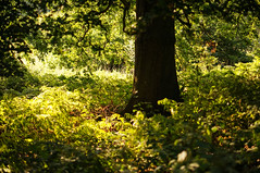 DSC04434-1 (kazpal) Tags: sunlight nature woodland outdoors fields forests 50mmf18 greenspaces emount sonynexsony5n