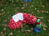 JingleBellWalk2011098