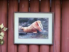 gpoy (TheDamnMushroom) Tags: framed walrus