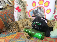 Lendemain de ftes :-P    The morning after a birthday ;-P (Kermitfrog :-D) Tags: cats france cat chats kitten chat maya humor kitty humour jura alcool katze gatto katzen anniversaire franchecomt katz dole bire chaton chatons panach humoristique lendemaindeftes