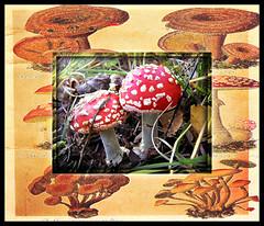 Autumn has come - have grown mushrooms. (tarelkaz1) Tags: autumn red texture mushrooms flora memories experiment topshots flickraward photosandcalendar natureselegantshots naturethroughthelens sonydscs730 theoriginalgoldseal mygearandme ipiccy