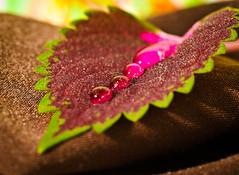Leave's on a napkin.Explored (Omygodtom) Tags: street city shadow red macro green nature table nikon bokeh tammy pdx tamron raindrop tamron90mm dk7 d7000