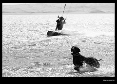 Kite Dog (idoazul) Tags: blackandwhite kite blancoynegro sports water pacific wind bn kitesurf paracas pacfico perú perukite