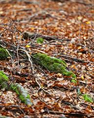Forca d'Acero_2 (Gioshot87 [Giorgio]) Tags: light italy leaves canon landscape leaf italia rainyday paesaggio abruzzo ef70200f4lusm forcadacero eos5dmarkii