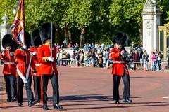 London (Edi Bhler) Tags: people plant man tree pflanze menschen mann guards baum gewehr 28300mmf3556 nikond800 buckinghampalacelm