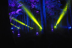 Lit Up (menzies.carrie) Tags: blue trees yellow night forest lights purple enchanted