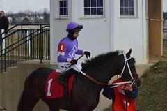 2013-03-27 (99) r6 Horacio Karamanos on #1 Tisnow Julie (JLeeFleenor) Tags: photos photography marylandracing marylandhorseracing laurelpark md jockey   jinete  dokej jocheu  jquei okej kilparatsastaja rennreiter fantino    jokey ngi horses thoroughbreds equine equestrian cheval cavalo cavallo cavall caballo pferd paard perd hevonen hest hestur cal kon konj beygir capall ceffyl cuddy yarraman faras alogo soos kuda uma pfeerd koin    hst     ko  horaciokaramanos maryland