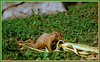 """Dog-Town Snack Time"" (Wolverine09J ~ 1 Million + Views) Tags: naturesphotos lapetitegalerie animalsimages natureskingdom prairiedogstudies"