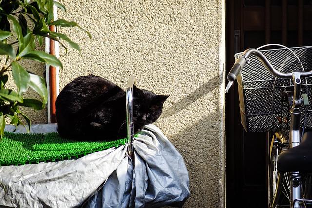 Today's Cat@2013-12-30