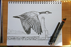 Sketching W/Pencil & Brush Pen (Jeannot7) Tags: ontario pencil ink sketch canadagoose brushpen cobourg