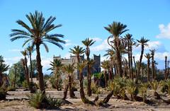 Skoura palmerie, Marokko 2013 november (wally nelemans) Tags: morocco maroc marokko palmerie skoura 2013