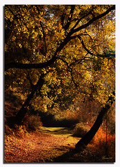 Fairytale (Mara86) Tags: autumn trees sunset espaa landscape hojas atardecer spain arboles paisaje andalucia bosque otoo jaen cazorla dorado mara86 nikond90