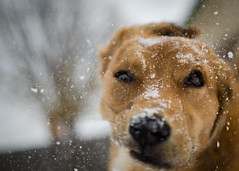 Face Shake (RedWing Foto) Tags: dog cats pets snow dogs animals puppy puppies domestic shaking