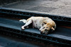 IMG_0673 (Michelan Francis) Tags: people bali dog history buildings temple culture tanalot