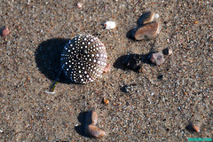 TheLittlistUrchin (mcshots) Tags: ocean california travel sea usa beach nature water colors coast sand rocks stock sealife pebbles malibu socal mcshots reef tidepools springtime losangelescounty
