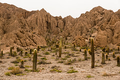 Salta - Quebrada Del Toro II (Pablo Begni) Tags: nikonflickrawardgold nikonflickraward d800 nikond800 mostremos nuestra argentina mostremosnuestraargentina nikon salta montaña cardon piedras nubes