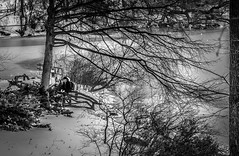 Enjoying the company... (C@mera M@n) Tags: blackandwhite candid candidpeople centralpark monochrome ny nyc newyork newyorkcity newyorkphotography people places snow thepond winter ice outdoors peoplewatching urbanlife