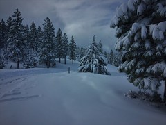 Around the Corner (The VIKINGS are Coming!) Tags: sierras tahoe california alpine blizzard skiing spruce pine fir