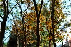 Dron (mirguzman) Tags: otoño autumn gijon xixon asturias dron hojas