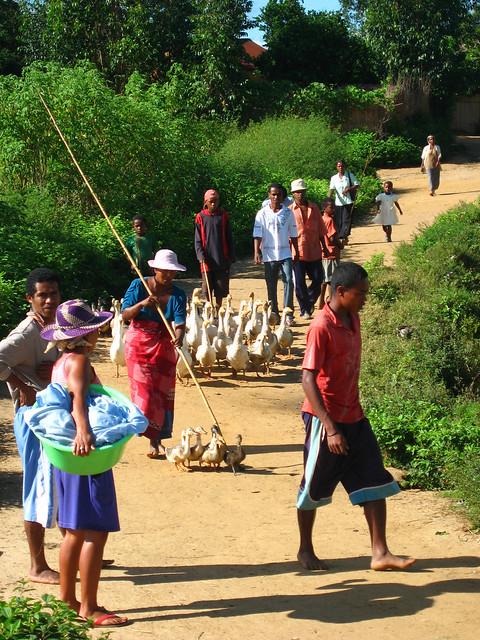 Madagascar2010 - 23