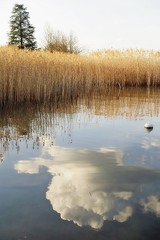 Lake of clouds (nathaliedunaigre) Tags: lac lacdannecy lake reflets reflections nuages clouds eau water roseaux reeds nature paysage landscape