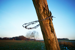 I'm catching the trees. HFF :-) (Gudzwi) Tags: hff happyfencefriday nature landscape fence zaun landschaft draht wire blue blau himmel sky holz wood