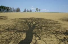 Schattenwurf - Explore (eulenbilder) Tags: schatten bäume ackerschatten licht schattenwurf