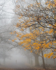 Colour Splash (Ida H) Tags: nature landscape trees woods forest autumn autumnal autumnleaves autumnalcolours yellow leaves fog foggy foggyday extremeweather throughherlens branches mist grey silhouette silhouettesinthefog figure person personinthedistance