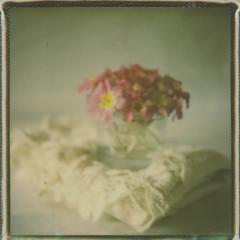 My pastel dream (l'imagerie poétique) Tags: limageriepoétique poeticimagery polaroidweekspring2017 polaroidsx70sonar tip600colorfilm painterly stilllife theimpossibleproject roidweek primroses bouquet romantic wildflowers fleurssauvages