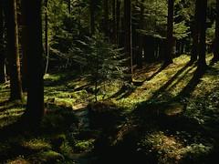 Deep in the forest / Tief im Wald (Caledoniafan (Astrid)) Tags: nikon nikoncoolpixl820 nikoncoolpix caledoniafan bach stream burn nature natur landscape landschaft spring frühling wald forest bavaria bayern bayerischerwald bavarianforest