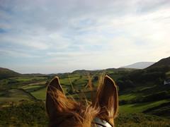 Through Horses Ears (GarethDaBell) Tags: horse horses ears through