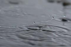 Aprilrain (Benny Hünersen) Tags: hagenør fredericia april 2017 dråber drops regn rain