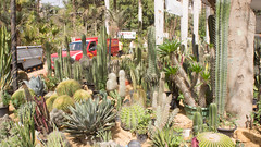 Cacti everywhere at Egypt's flowers show 2017 (Kodak Agfa) Tags: egypt flowers plants spring sonynex nex5 northafrica mideast middleeast parks gardens orman ormanpark flowersfair2017 flowersshow2017 giza thisisgiza thisisegypt مصر معرضالزهور معرضزهورالربيع معرض الاورمان حديقة حديقةالاورمان الجيزة cactus cacti