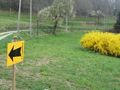 Monticello – 19/03/17 – Km 18 (Londrina92) Tags: fiasp tapasciata camminata monticello brianza lombardia lombardy segnaletica signage freccia arrow sforsizia fiori flowers cespuglio outdoor nature