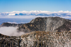 Suspended (CreArtPhoto.ro) Tags: iarna lonely nori cozia intheclouds beauty clouds trees zapada romania padure landscapephotography seaofclouds awayfromthecrowd snow forest illusion