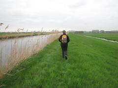 IMG_8378 (kassandrus) Tags: hiking wandelen netherlands nederland struinenenvorsen oude hollandse waterlinie