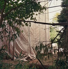 Backyard Jungle (jonnykam) Tags: backyard jungle bamboo veil sheath nude cloth rag tree nature outdoor backtonature construction watertower water system government rolleiflex35e rolleiflex35 rolleiflex film 120mm squareformat mediumformat ektar100 filmisnotdead