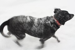 snow Lucy (jak.conrad) Tags: lucy twizzler dog dogs rainbowbridge heartbroken rescue pups dogislove mutt