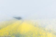 ZZT_4034-11 (pavelkricka) Tags: holbrook oil seed rape motion blur intentionalcameramovement icm multiple exposure